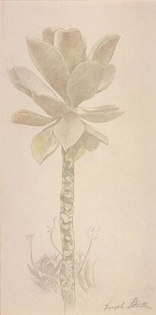 Joseph Stella; Flower Study; c.1919; silverpoint and crayon on prepared paper; 32.8 x 16.5 cm; Smithsonian American Art Museum