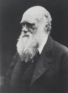 Julia Margaret Cameron; Charles Darwin; 1868