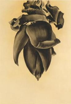 Georgia O'Keeffe; Banana Flower No. II; 1934; charcoal on paper; Georgia O'Keeffe Museum