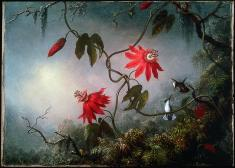 Martin Johnson Heade; Passion Flowers and Hummingbirds; c.1870; oil on canvas; 39.37 x 54.93 cm; Museum of Fine Arts Boston