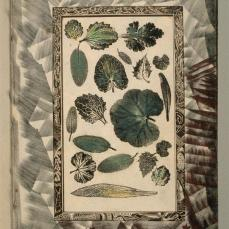Charles Carrick; Page (24) from the book, Flights of Fancy or Imaginary Scraps; c.1842-77; stenciled watercolor, with pen and ink, pastel, and leave prints; 22.1 x 15.8 cm; Fine Arts Museum of San Francisco