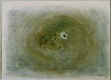 Morris Graves; Winter Flower; 1954; Pastel and gouache on toned paper; 20.32 x 27.94 cm; The Phillips Collection, Washington DC