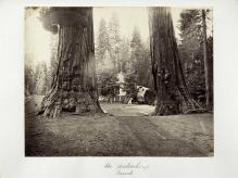 Carlton E. Watkins; The Sentinels, 315 feet, Yosemite; c.1872; albumen silver print from glass negative; The Metropolitan Museum of Art