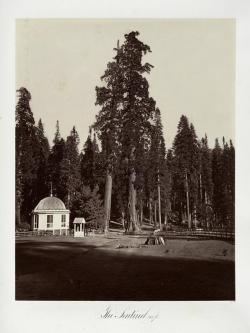 Carlton E. Watkins; The Sentinel, 315 feet; c.1876; albumen silver print from glass negative; The Metropolitan Museum of Art