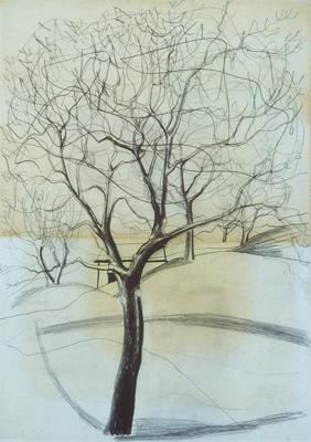 Ben Nicholson; Tree at Saval; 1958; pencil and wash; 51 x 36 cm