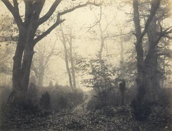 Eugène Cuvelier; Fontainebleau Forest; early 1860s; salted paper print from glass negative; 19.8 x 25.8 cm; The Metropolitan Museum of Art