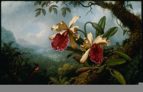 Martin Johnson Heade; Orchids and Hummingbird; c.1875; oil on canvas; 35.88 x 56.2 cm; Museum of Fine Arts, Boston