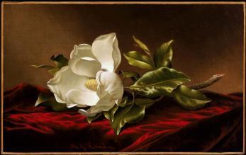 Martin Johnson Heade; Magnolia Grandiflora; c.1885; oil on canvas; 38.42 x 61.28 cm; Museum of Fine Arts, Boston