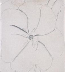 Georgia O'Keeffe; Untitled (White Flower on Red Earth); 1943; graphite on paper; Georgia O'Keeffe Museum