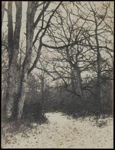 Eugène Cuvelier; Fontainebleau Forest; c.1860; salted paper print from paper negative; 25.9 x 19.7 cm; The Metropolitan Museum of Art