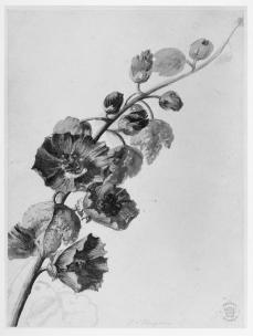 Jan van Huysum; Flower study; early 18th century; watercolor over traces of graphite on paper; 235 x 171 mm; British Museum