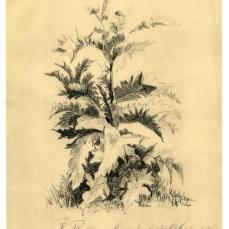 Vincent van Gogh; Untitled Botanical Study; 1863; Kröller-Müller Museum, Otterlo, Gelderland, Netherlands