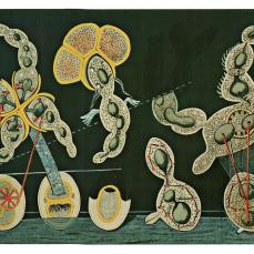 Max Ernst; The Gramineous Bicycle; c.1921; gouache and ink on botanical chart; Museum of Modern Art, New York, NY