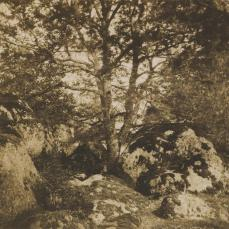 Gustave Le Gray; Oak Tree and Rocks, Forest of Fontainbleau; 1849-52; salted paper print from paper negative; 25.2 x35.7 cm; The Metropolitan Museum of Art