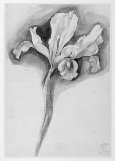 Jan van Huysum; Flower study; early 18th century; watercolor on paper; 192 x 130 mm; British Museum
