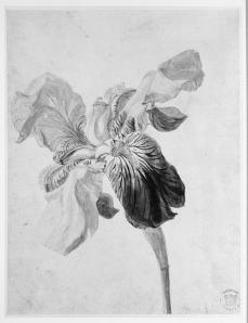 Jan van Huysum; Flower study; early 18th century; watercolor on paper; 204 x 154 mm; British Museum