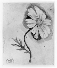 Jan van Huysum; Flower study; early 18th century; watercolor on paper; 91 x 113 mm; British Museum