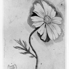 Jan van Huysum; Flower study; early 18th century; watercolor on paper; 91 x 113 mm; British Museum
