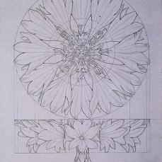 Philipp Otto Runge; Construction of a Cornflower; 1808-9; pen, ink, pencil on paper; 25 x 19.4 cm