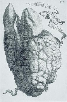 Giovanni Battista Ferrari; Hesperides: Malum citreum multiforme; etching and engraving; 1646