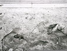 Robert Adams; At the Curb of a City Street, Loma Linda; 1986