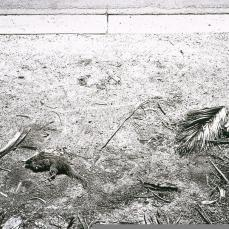 Robert Adams; At the Curb of a City Street, Loma Linda; 1986