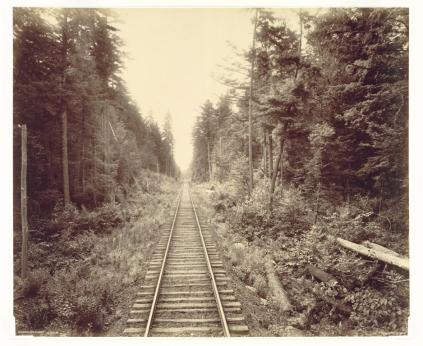 William H. Rau; Hemlock Forest, Leigh Valley Railroad; 1895; albumen print from wet collodion negative; The Cleveland Museum of Art