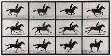 Eadweard Muybridge; Galloping Horse; 1878; George Eastman House, Rochester, NY