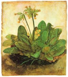 Albrecht Dürer; Tuft of Cowslips; 1526; watercolor and body color on vellum, brush, heightened with white; 192 x 168 mm; The Armand Hammer Museum of Art and Cultural Center, Los Angeles, CA