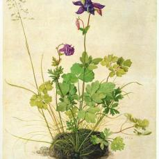 Albrecht Dürer; Columbine; 1526; watercolor and bodycolor, brush, heightened with white, on vellum, mounted on cardboard; 356 x 287 mm; Albertina, Vienna, Austria