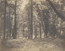 Gustave Le Gray; The Forest at Fontainebleau; c.1855; salt print from a wax paper negative; 29.5 x 37.7 cm; Yale University Art Gallery