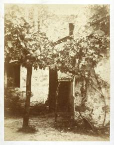 Eugène Cuvelier; Untitled (Grape Vine); 25.7 x 20 cm; Fine Arts Museums of San Francisco