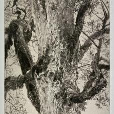 Adolf von Menzel; Study of a Tree; c.1885-90; graphite on wove paper; 18.3 x 11.5 cm; Fine Arts Museum of San Francisco