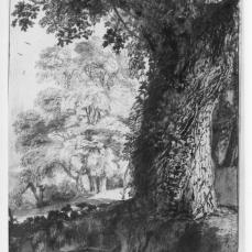 Claude Lorrain; Oak in Vigna Madama; 1638; pen and brown ink and brown wash over graphite; 330 x 224 mm; British Museum