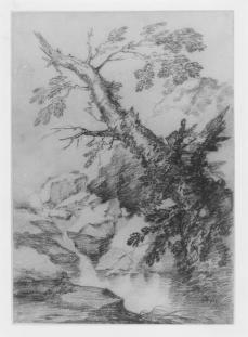 Peeter Boel; A Broken Tree Overhanging a Stream; 1637-74; black chalk, with some graphite; 350 x 248 mm; British Museum