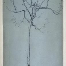 George Henry Boughton; Study of a Tree; c.19th century; graphite; 24.2 x 17 cm; Fine Arts Museum of San Francisco