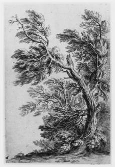 Peter von Bemmel; Study of a tree; chalk; 305 x 205 mm; British Museum