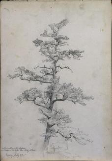David Johnson; Pine Tree, Conway, New Hampshire; c.1851; graphite with pen and brown ink; 36.2 x 25.4 cm; The Cleveland Museum of Art
