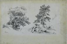 David Johnson; Chestnut and Pine; 1869; graphite; 30.5 x 46.9 cm; The Cleveland Museum of Art