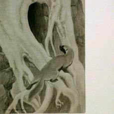 Charles Livingston Bull; Weasel peering into tree root; c.1890-1932; charcoal; Library of Congress, Prints and Photographs Division, Washington DC