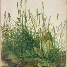 Albrecht Dürer; Large Piece of Turf (The Great Turf); 1503; watercolor and tempera on paper, mounted on cardboard; 410 x 315 mm; Graphische Sammlung Albertina