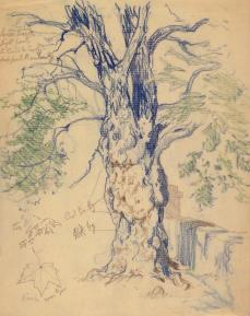 Edward Henry Potthast; Study of a Tree; graphite and blue, green, and brown colored pencil on paper; The Minneapolis Institute of Arts