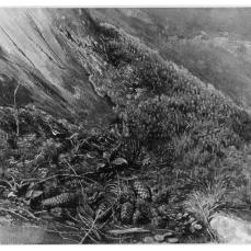 Frederic William Burton; A Mossy Tree Trunk; watercolor; 210 x 269 mm; British Musuem