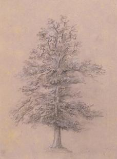Théodore Rousseau; Tree Study; 1825; graphite and white chalk on lavender wove paper; The Minneapolis Institute of Arts