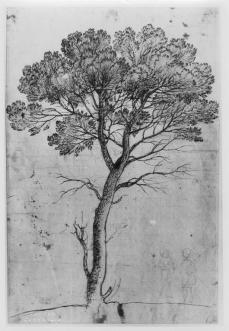 Claude Lorrain; Pine Tree; 1665; pen and brown ink over graphite; 388 x 260 mm; British Museum