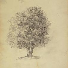 THéodore Rousseau; Tree Study; 1825; graphite on white wove paper; The Minneapolis Institute of Arts