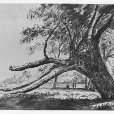 Anthonie Waterloo; Study of a Leaning Tree; mid 17th century; black chalk, with gray wash, on cream paper;204 x 312 mm; British Museum