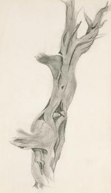 Georgia O'Keeffe; Dead Cedar Tree; 1937; graphite on paper; Georgia O'Keeffe Museum