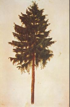 Albrecht Dürer; Pine Tree; 1495-9; watercolor; 295 x 196 mm