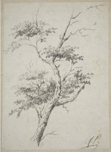 Jean Pillement; Sketch of a tree; 18th century; Crayon; Museum of Fine Arts, Boston